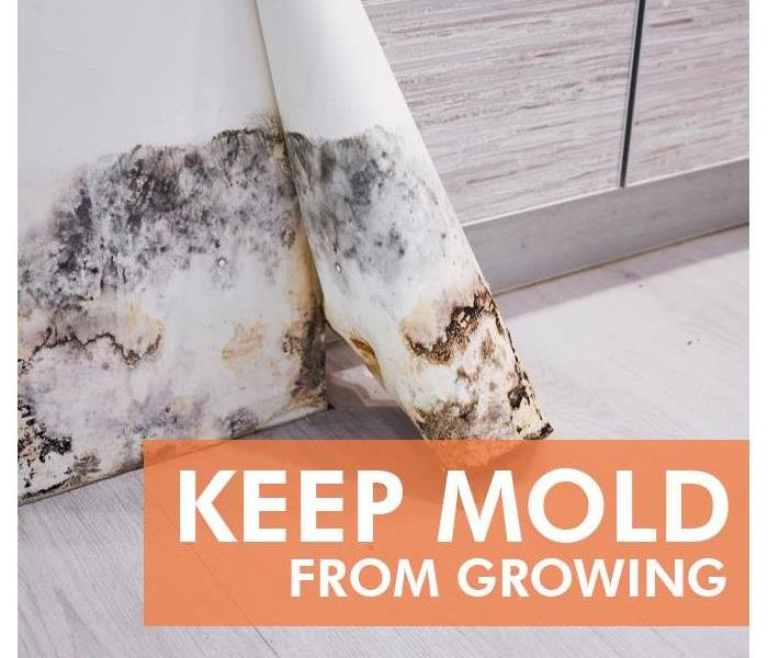 Mold Remediation 3 Reasons You Should Use a Professional Service To Mold Test Your Home