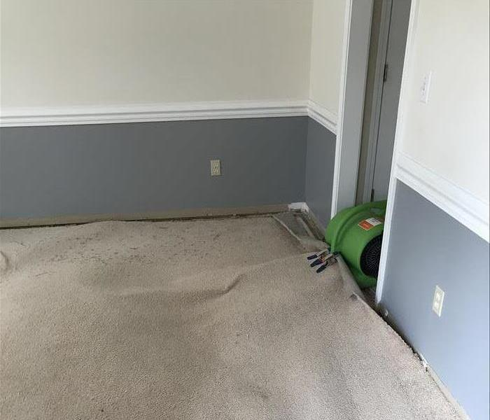 Water Damage 3 Signs Your Carpet Can Be Saved After a Flood