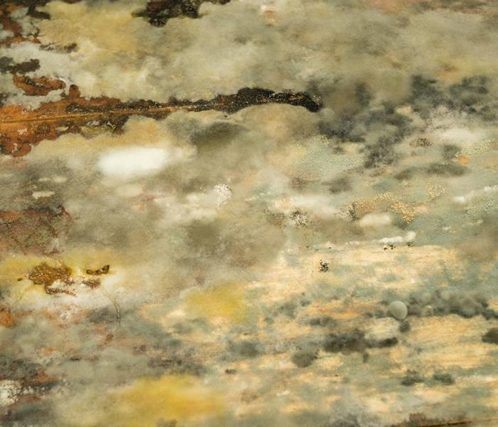 Mold Remediation 5 Common Types of Household Mold