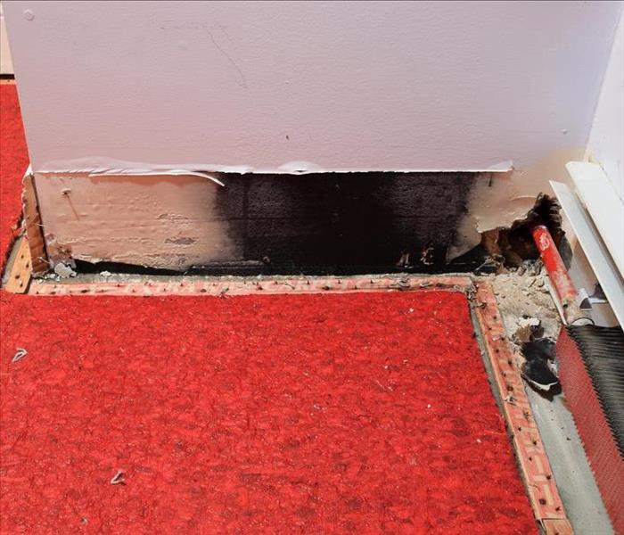 Black mold on baseboard